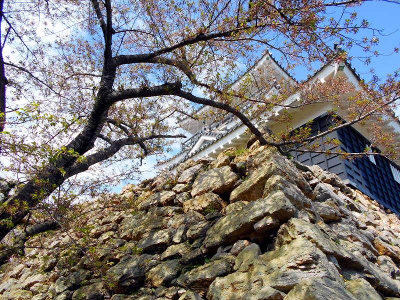浜松・遠州鉄道2015その4・浜松城-4515