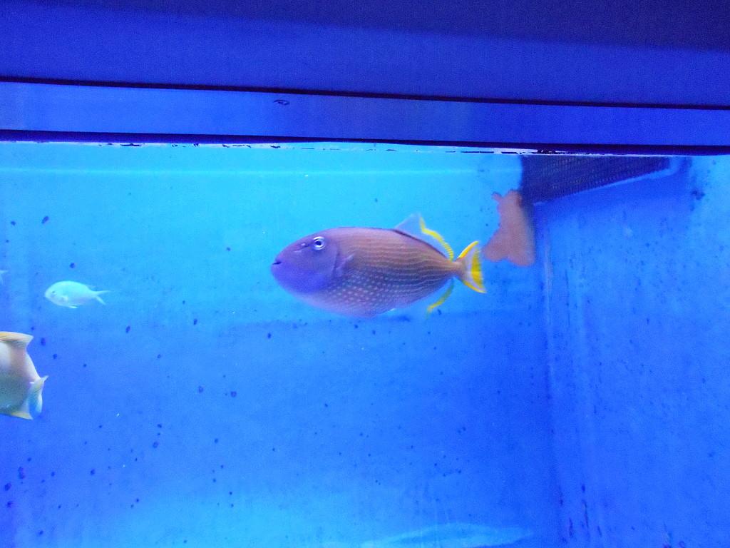 蒲郡・竹島水族館の保毛男ちゃん2017-1103