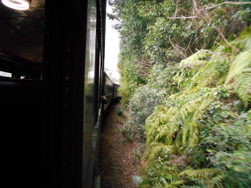 静岡・大井川鐵道のSL・車窓の風景2016-1416
