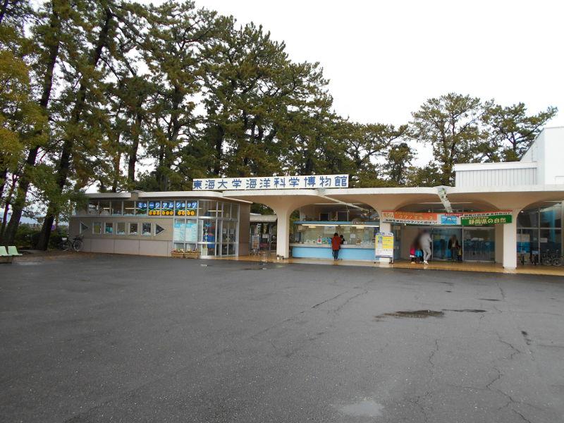 静岡・清水の東海大学海洋科学博物館-6111