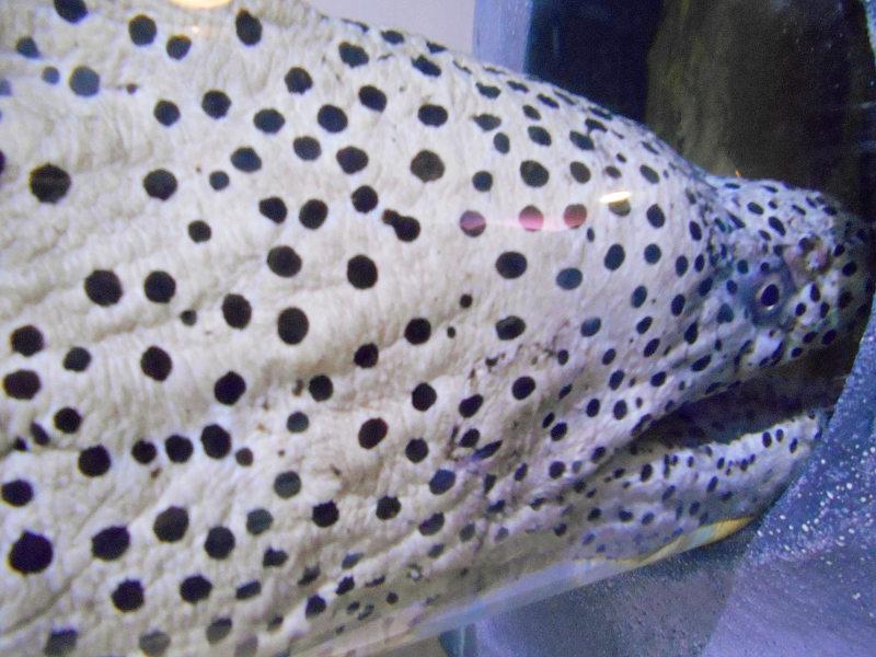 静岡・清水の東海大学海洋科学博物館-6113