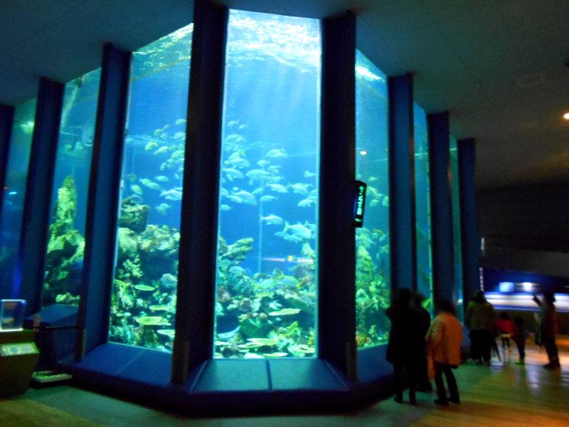 静岡・清水の東海大学海洋科学博物館-6117