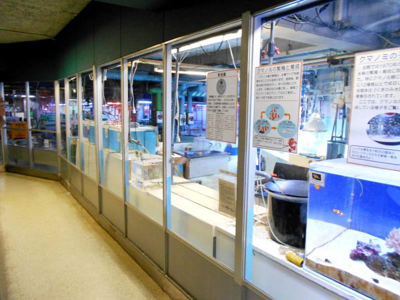 静岡・清水の東海大学海洋科学博物館-6131