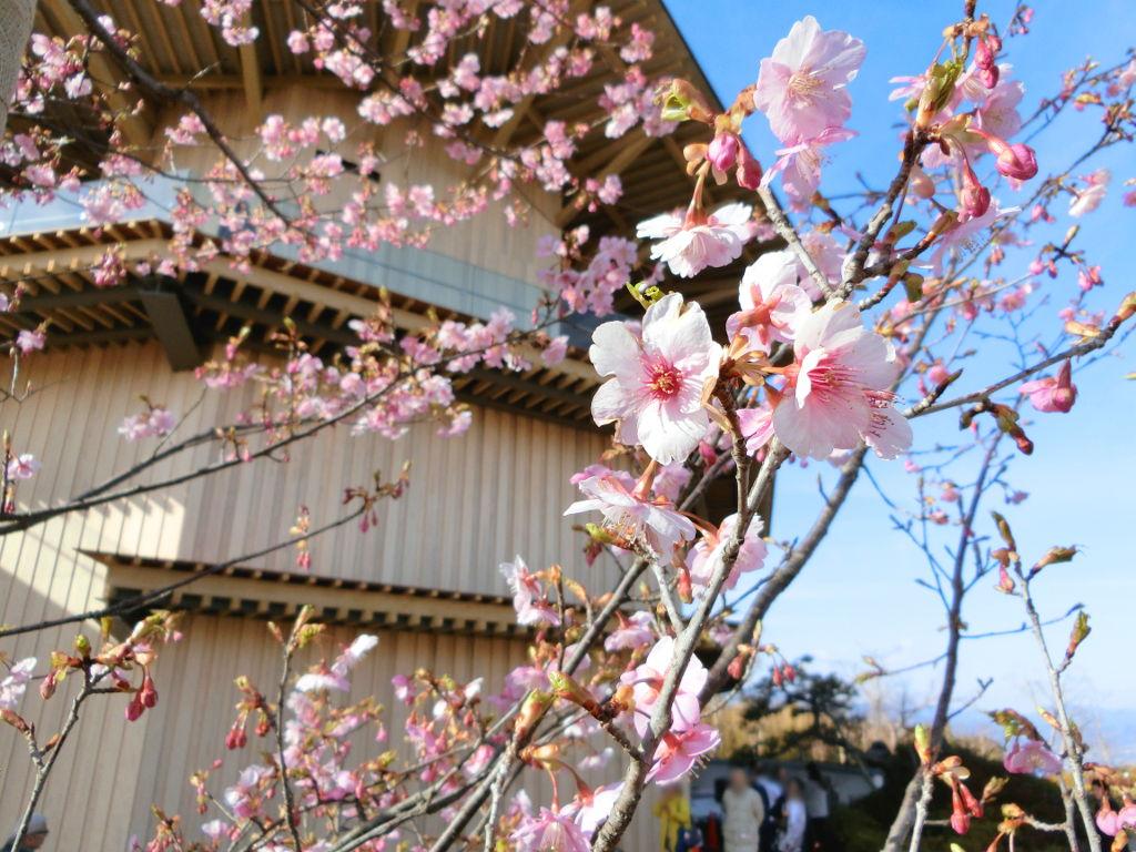 静岡で新年会2019・日本平の絶景-1114