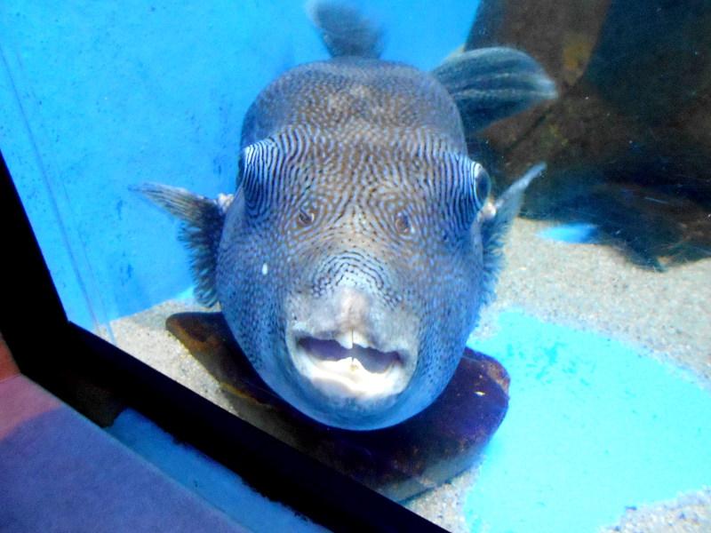 蒲郡・竹島水族館2016-6127
