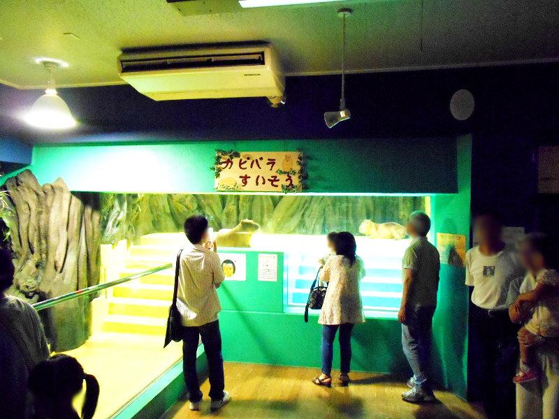 蒲郡・竹島水族館2016-6130