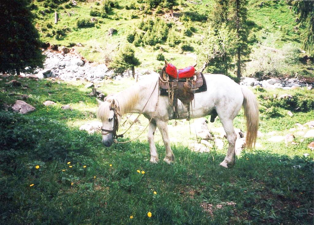 ユーラシア大陸鉄道横断旅行 Go West!1996その23・天池・馬に乗って山登り-2301