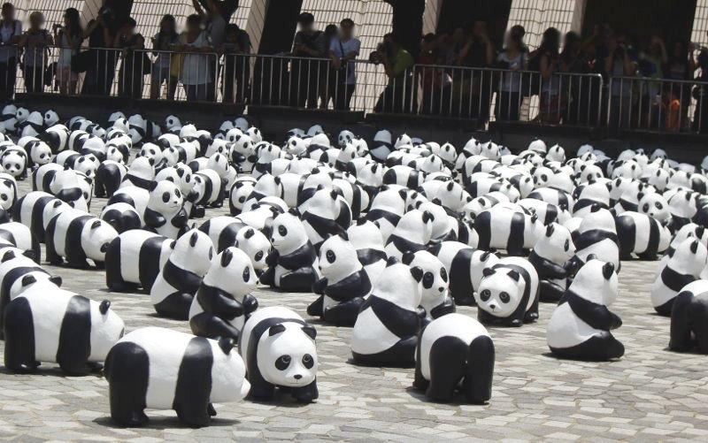 香港・小心地滑友の会 その10・香港のパンダ2014夏-1009