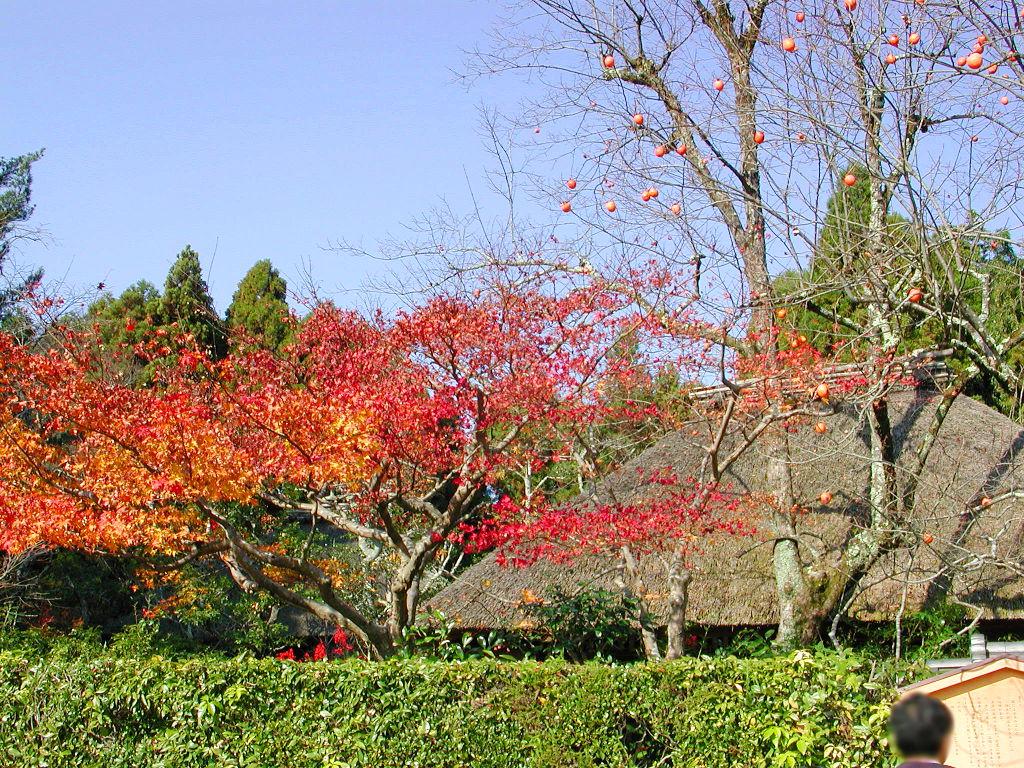 秋の京都2006-9501