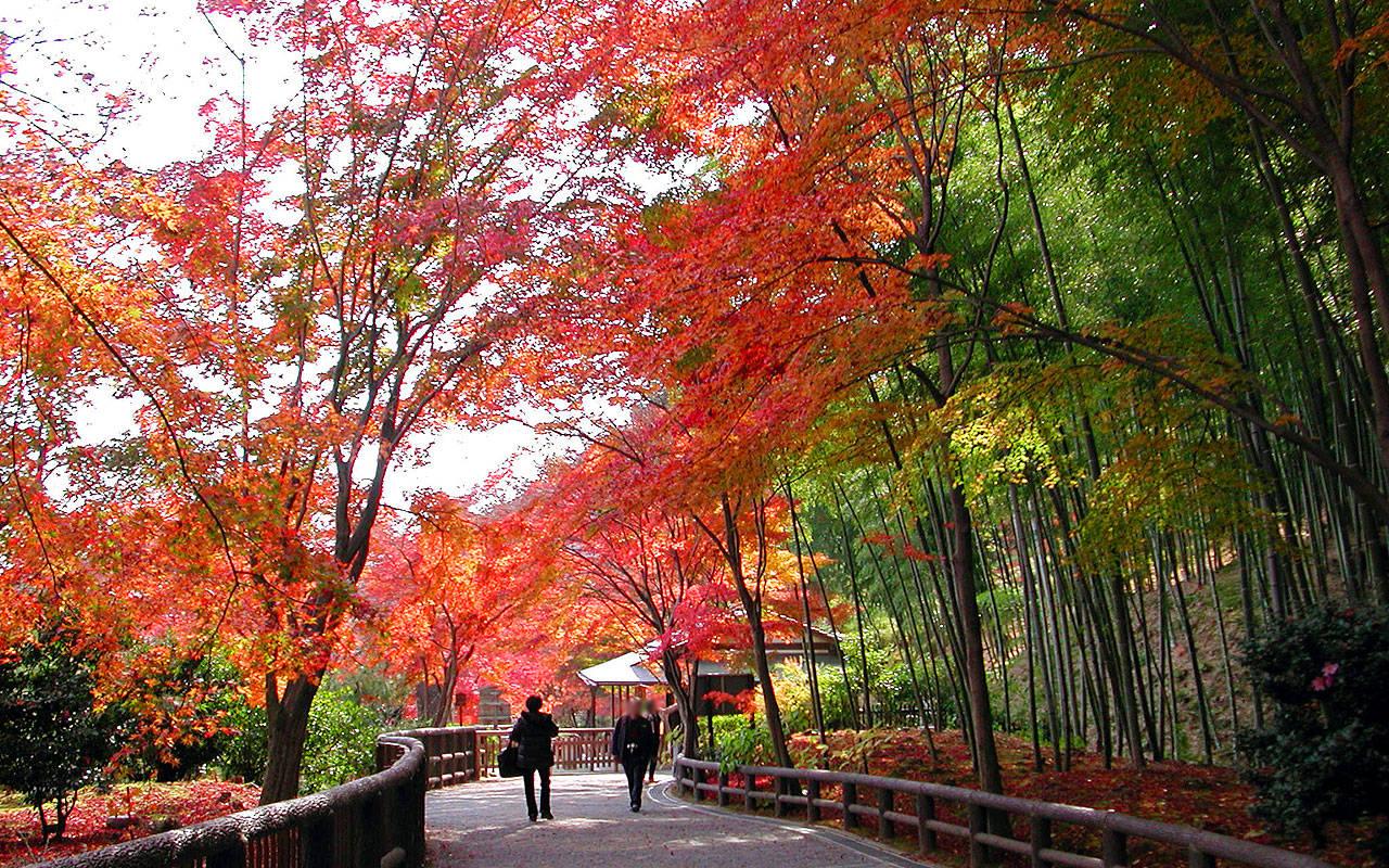 秋の京都2006-9502
