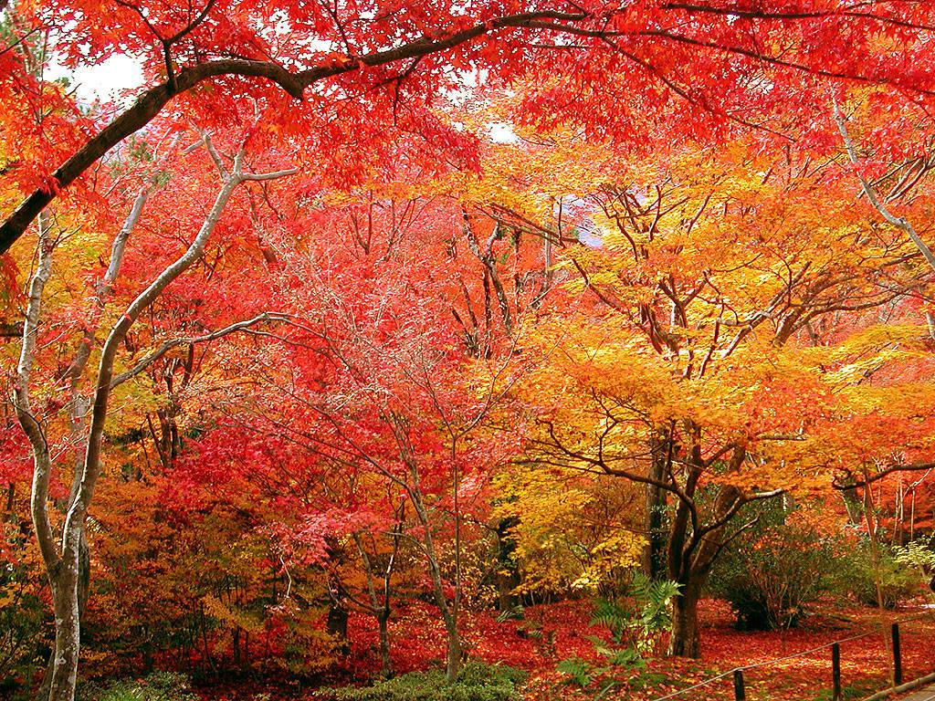 秋の京都2006-9503