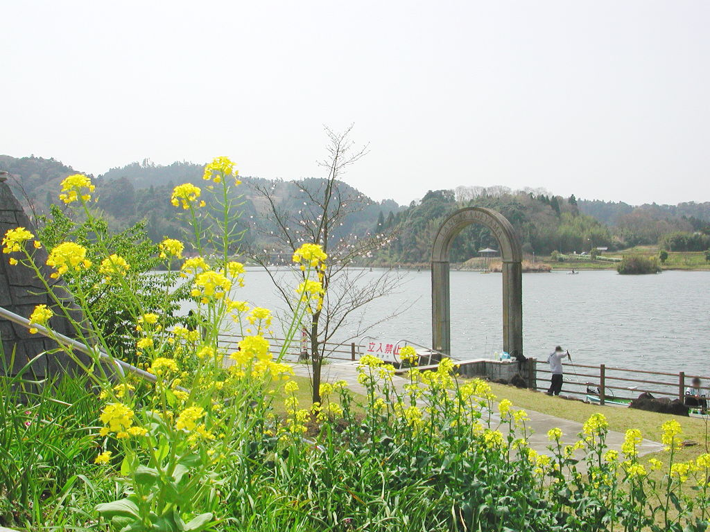 房総・菜の花と久留里線2007-4120