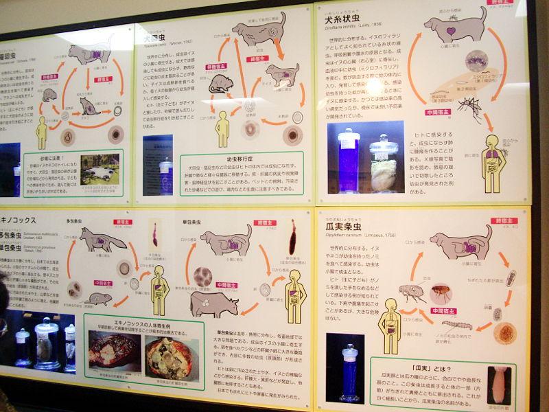 東京・目黒寄生虫館2013-807
