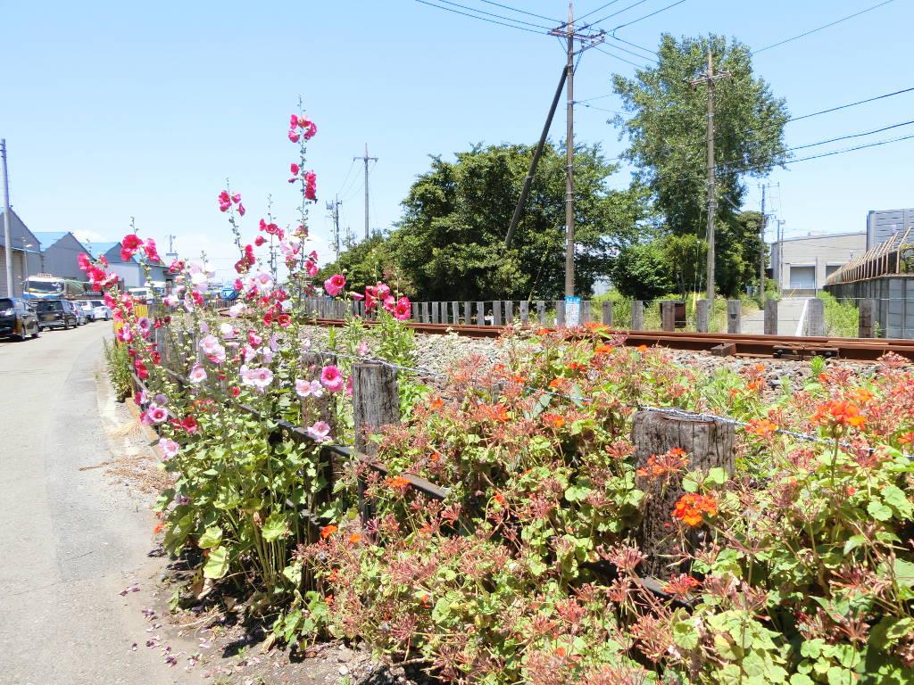 京浜急行大師線を歩く。その1・小島新田駅と川崎貨物駅2018夏-1122
