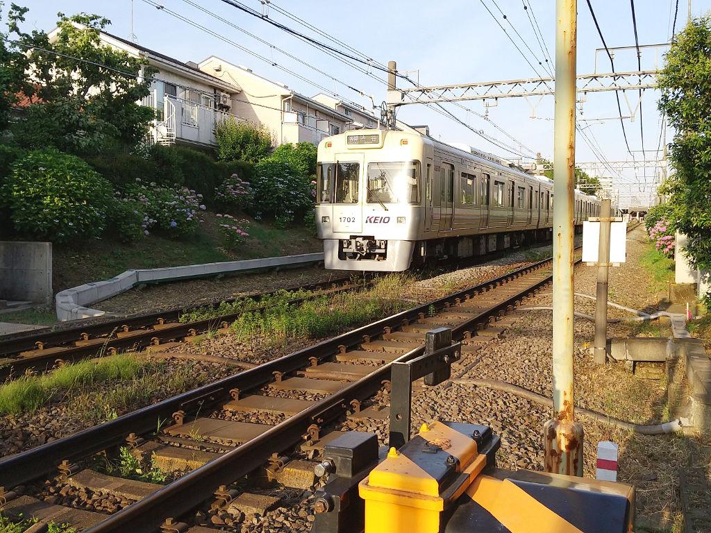 東京・京王井の頭線下北沢駅のあじさい2020初夏-1001
