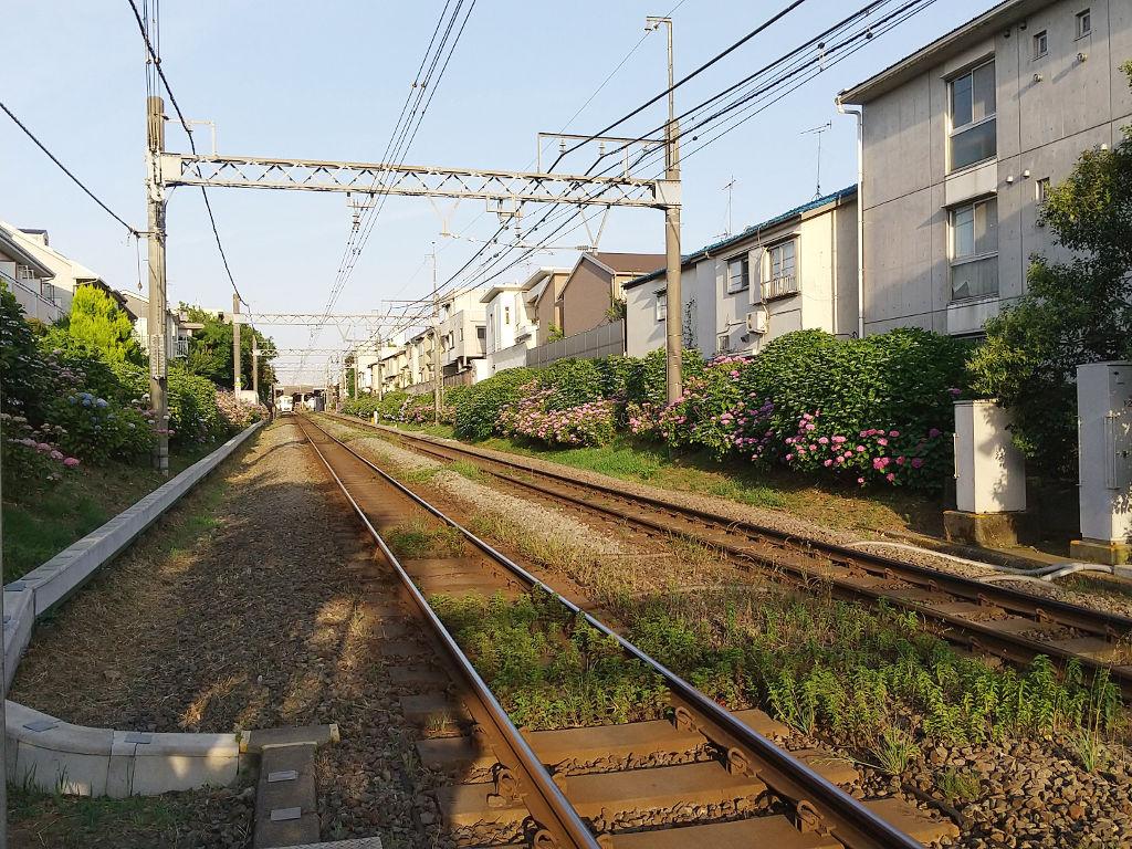東京・京王井の頭線下北沢駅のあじさい2020初夏-1002
