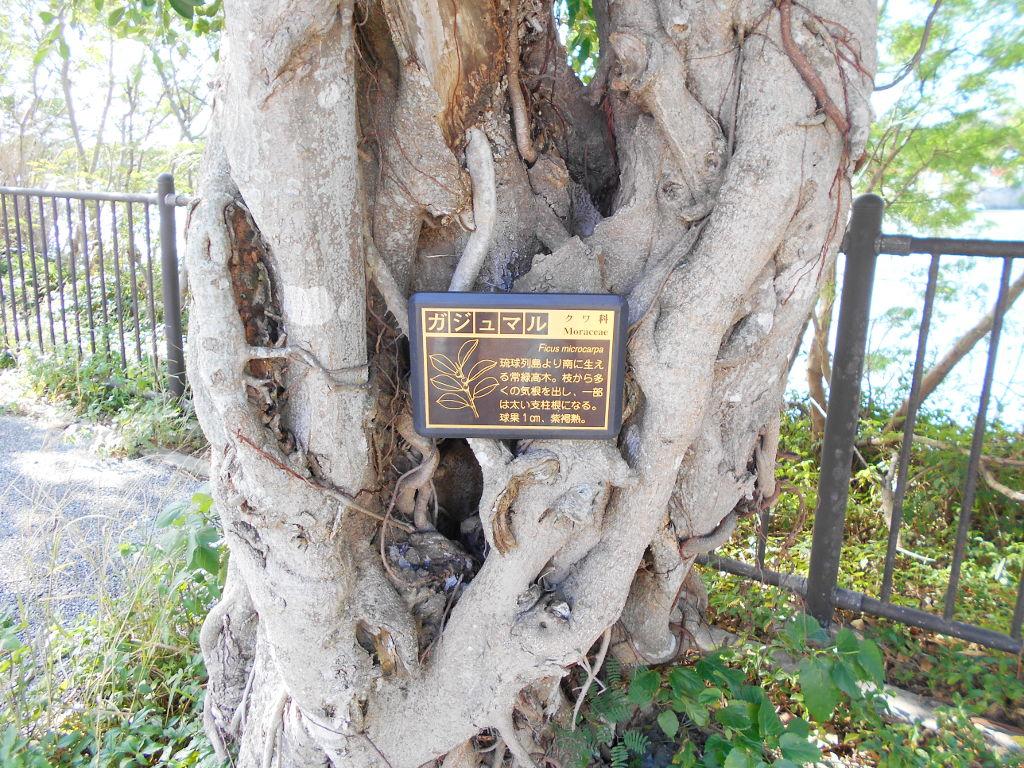 沖縄・那覇で年越し2018その10・湖畔をお散歩・漫湖-2012