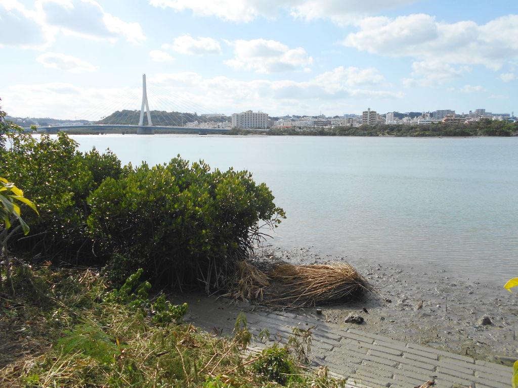 沖縄・那覇で年越し2018その10・湖畔をお散歩・漫湖-2021