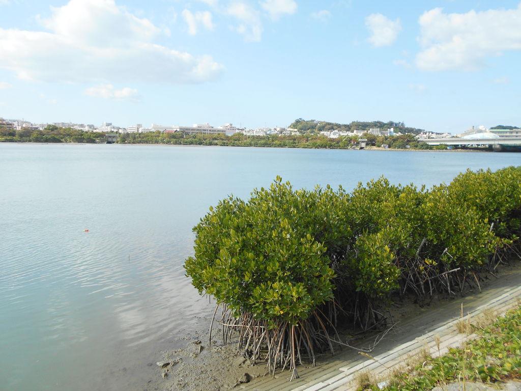 沖縄・那覇で年越し2018その10・湖畔をお散歩・漫湖-2022