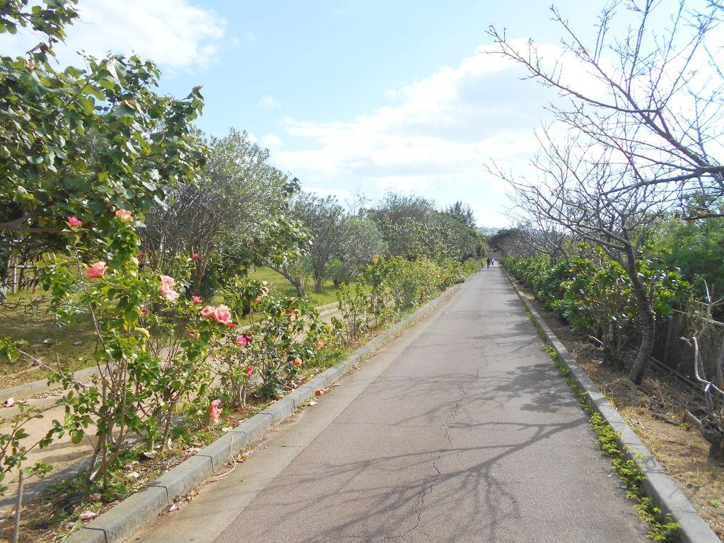 沖縄・那覇で年越し2018その10・湖畔をお散歩・漫湖-2023