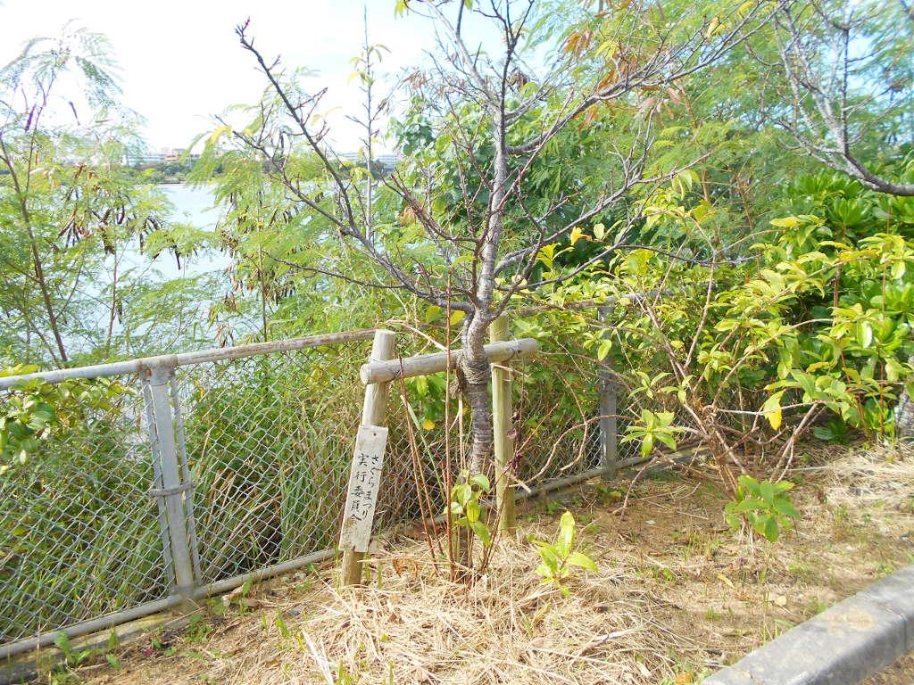沖縄・那覇で年越し2018その10・湖畔をお散歩・漫湖-2024