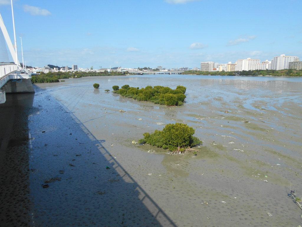沖縄・那覇で年越し2018その11・湿地をお散歩・漫湖-2107