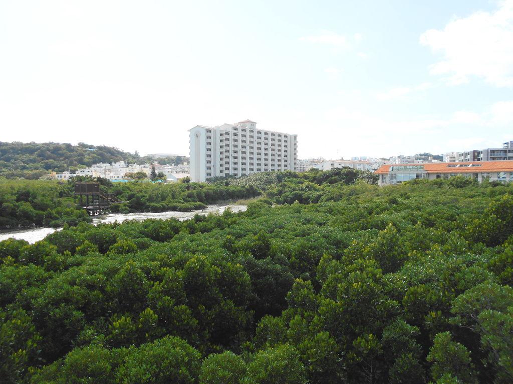 沖縄・那覇で年越し2018その11・湿地をお散歩・漫湖-2111
