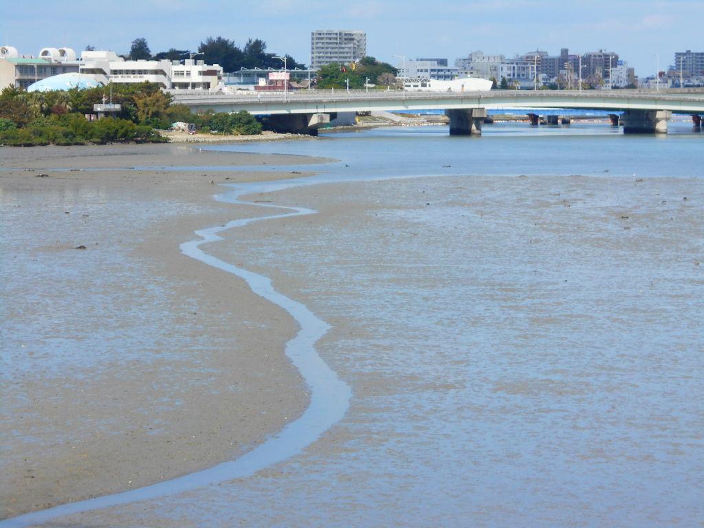 沖縄・那覇で年越し2018その11・湿地をお散歩・漫湖-2112
