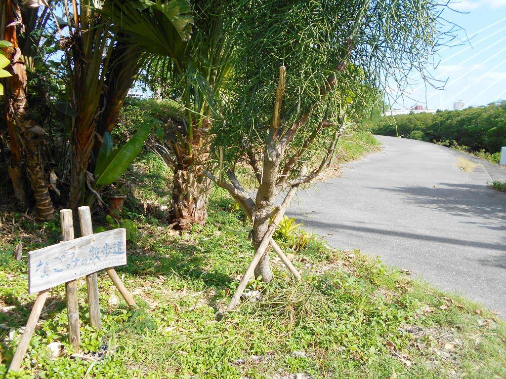 沖縄・那覇で年越し2018その11・湿地をお散歩・漫湖-2119