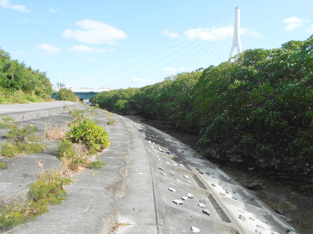 沖縄・那覇で年越し2018その11・湿地をお散歩・漫湖-2120