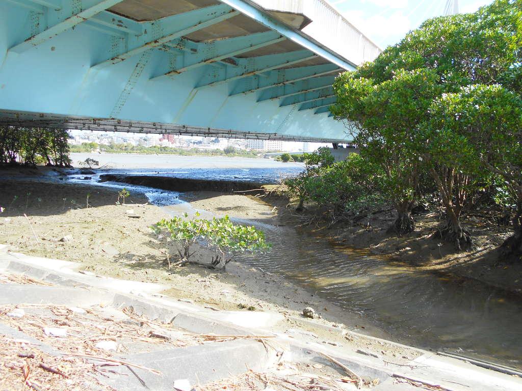 沖縄・那覇で年越し2018その11・湿地をお散歩・漫湖-2124