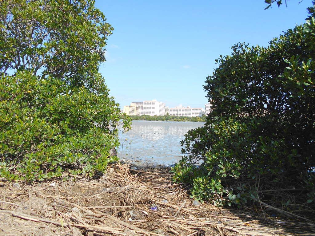 沖縄・那覇で年越し2018その11・湿地をお散歩・漫湖-2126