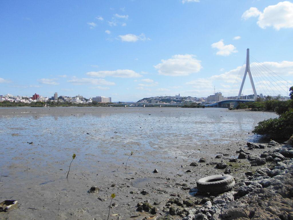 沖縄・那覇で年越し2018その11・湿地をお散歩・漫湖-2129