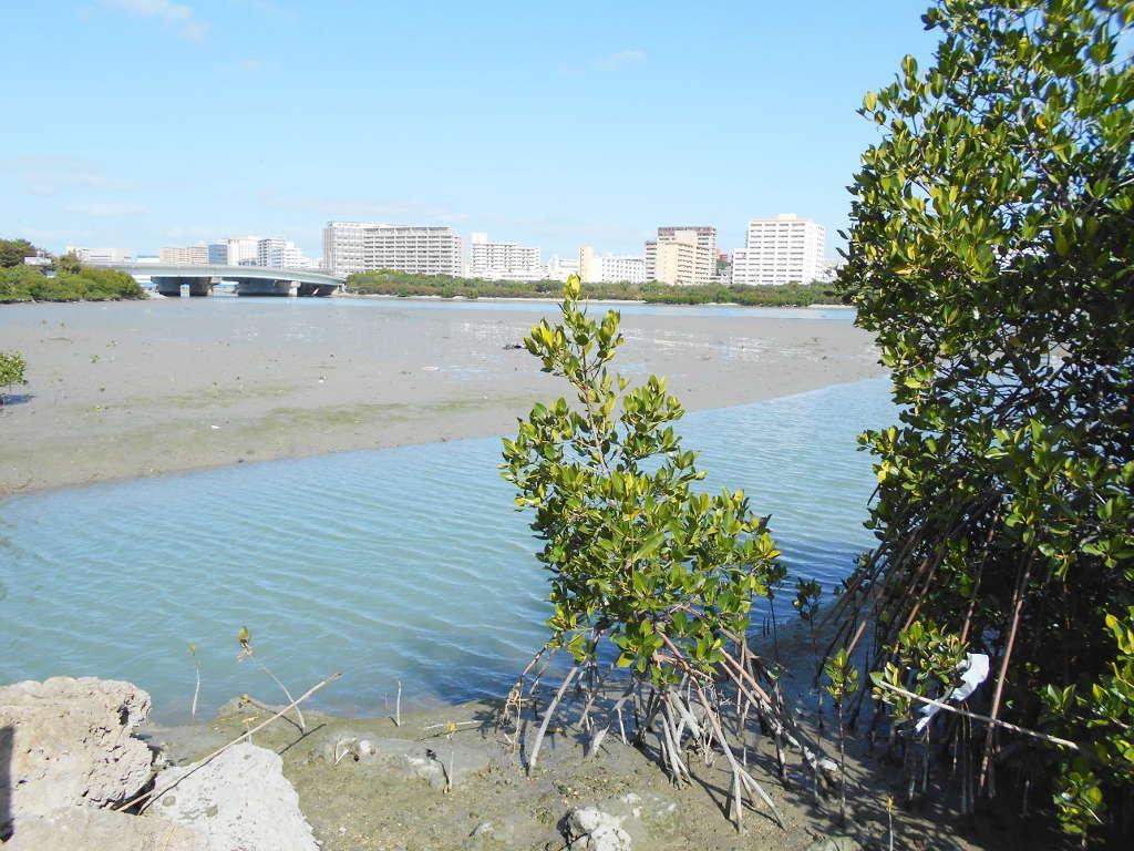 沖縄・那覇で年越し2018その11・湿地をお散歩・漫湖-2131