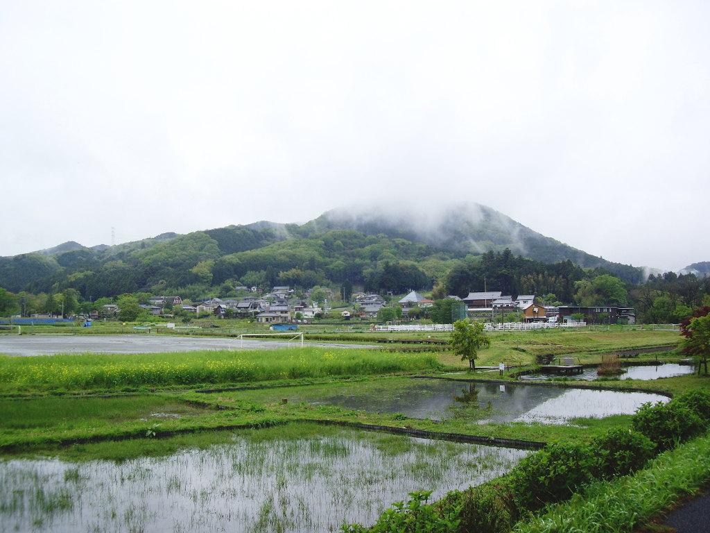 埼玉・高麗の巾着田2013春-1105