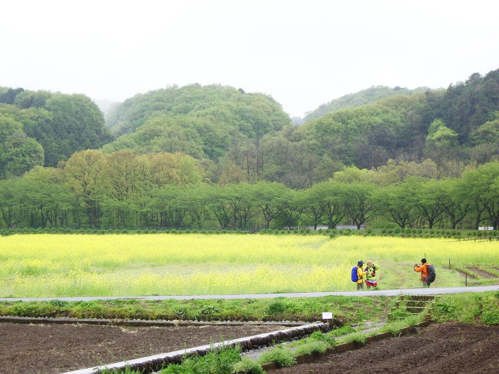 埼玉・高麗の巾着田2013春-1106