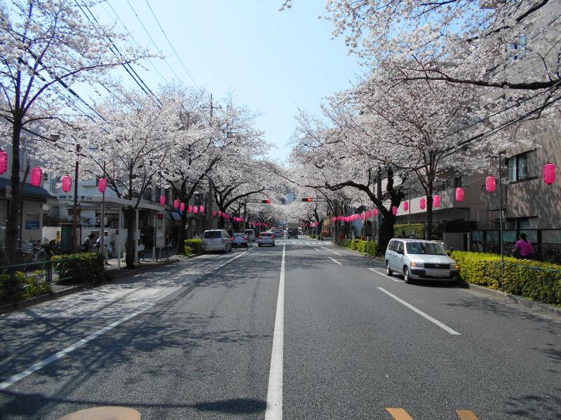 西武新宿線・中野通りの桜2015-4001