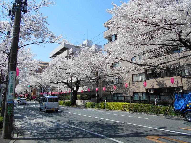 西武新宿線・中野通りの桜2015-4002