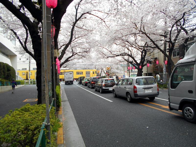 西武新宿線・中野通りの桜2015-4007