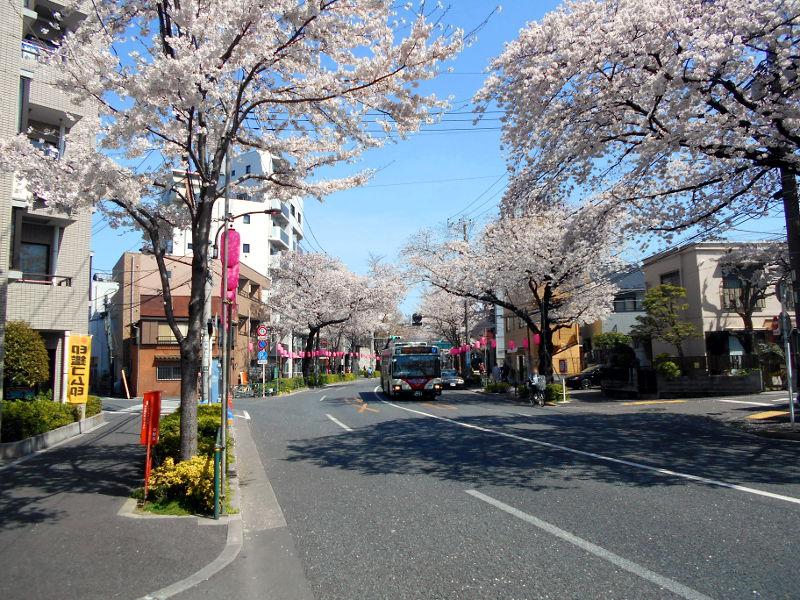 西武新宿線・中野通りの桜2015-4008