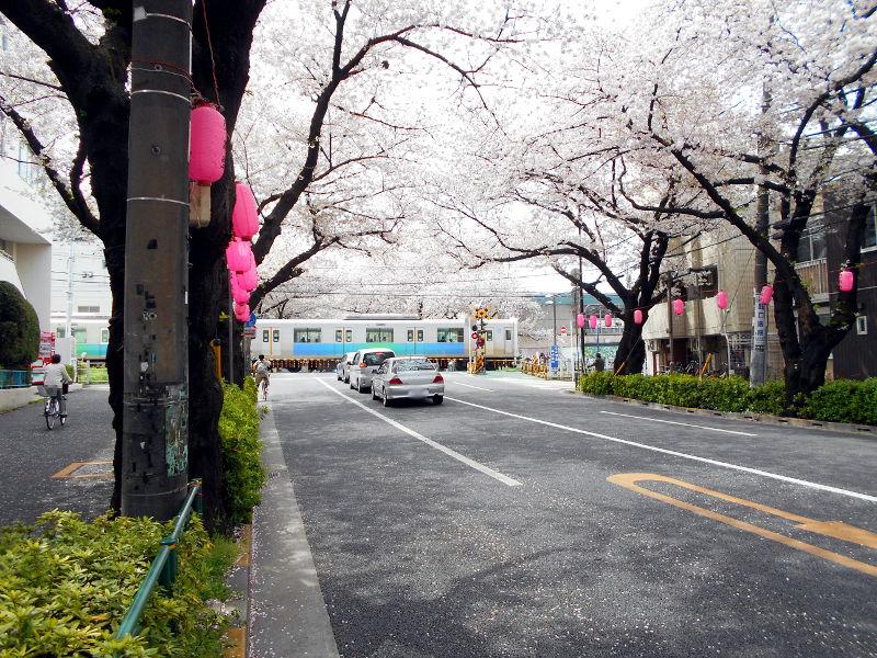 西武新宿線・中野通りの桜2017-9103