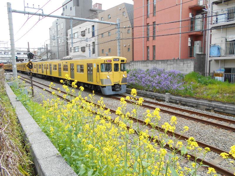 西武新宿線・中野通りの桜2017-9106