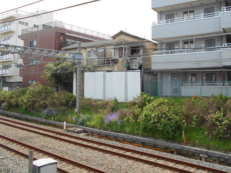 西武新宿線・中野通りの桜2017-9107