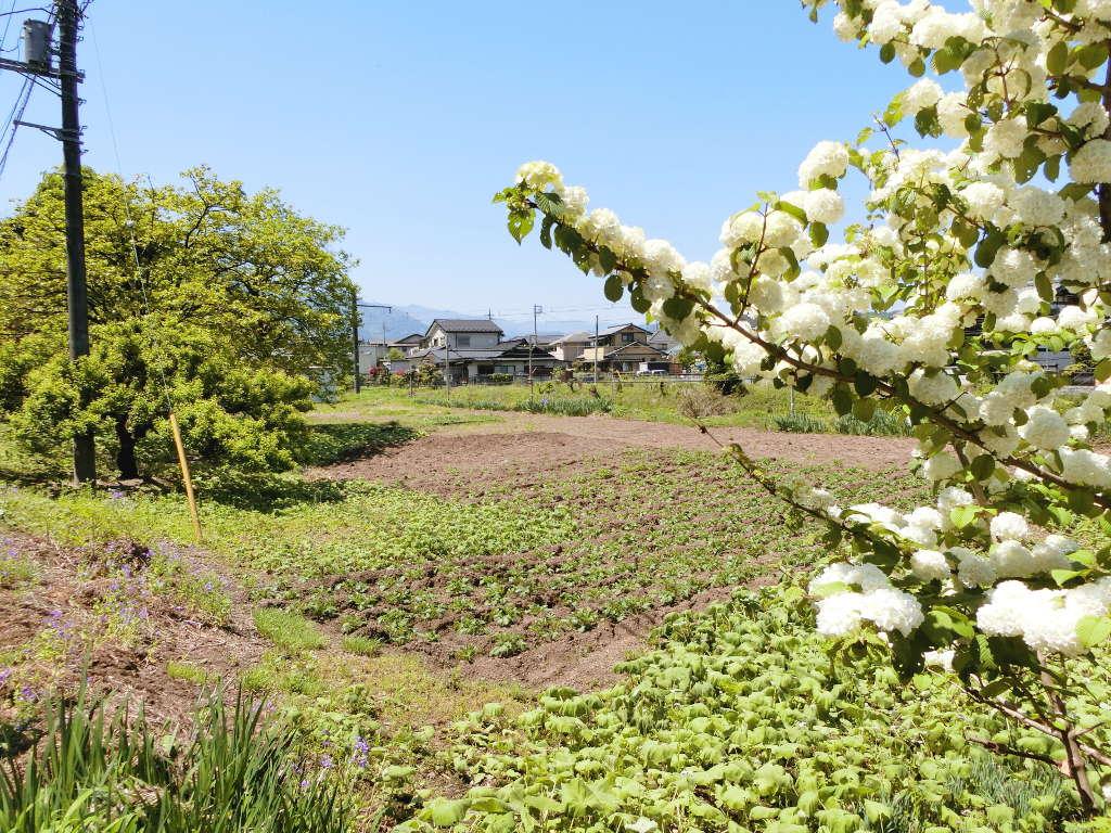 秩父鉄道の貨車「ヲキ」を楽しむ・その2影森駅から三輪駅へ2018春-9214