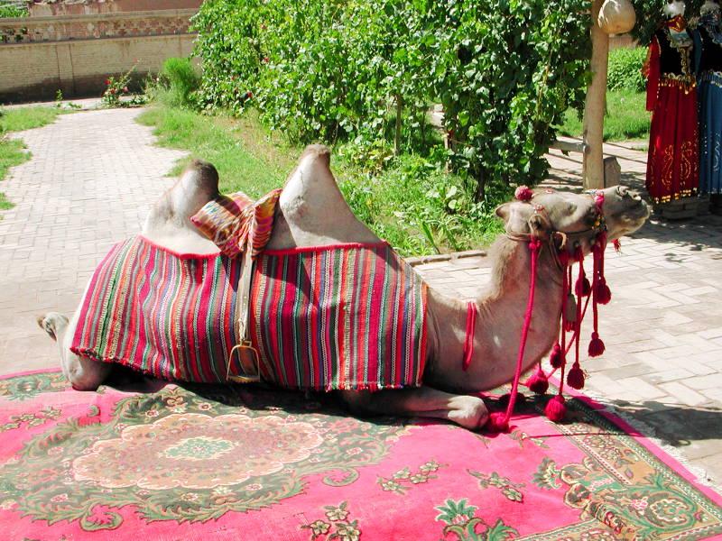 シルクロード一人旅「我的長征2006」その9・カシュガル・香妃墓と並木道-0917