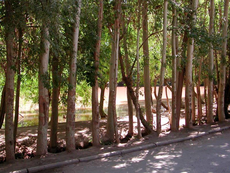 シルクロード一人旅「我的長征2006」その9・カシュガル・香妃墓と並木道-0926