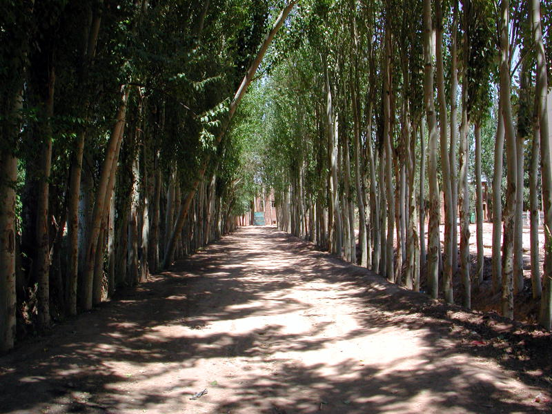 シルクロード一人旅「我的長征2006」その10・カシュガル・老城探検-1001