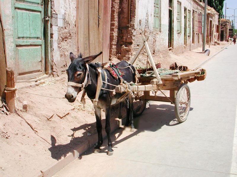 シルクロード一人旅「我的長征2006」その10・カシュガル・老城探検-1005
