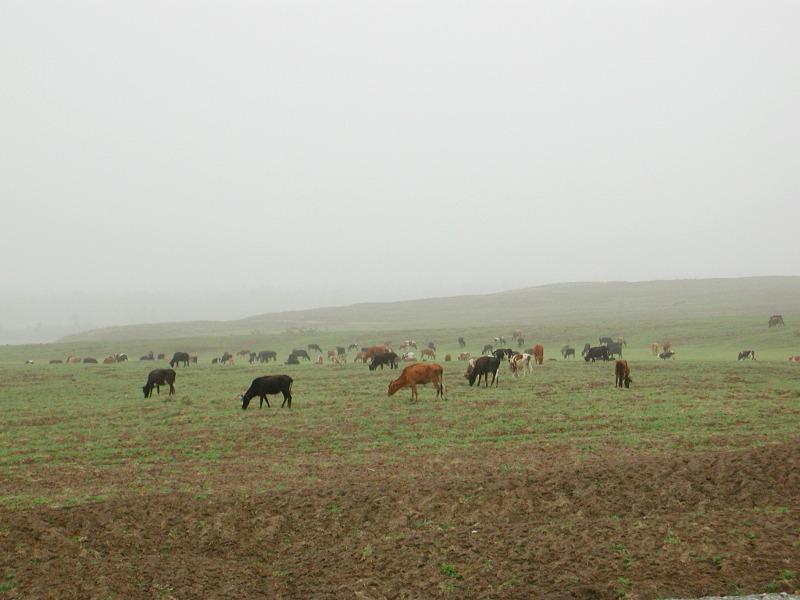 シルクロード一人旅「我的長征2006」その15・カシュガル・カラクリ湖への道-1517