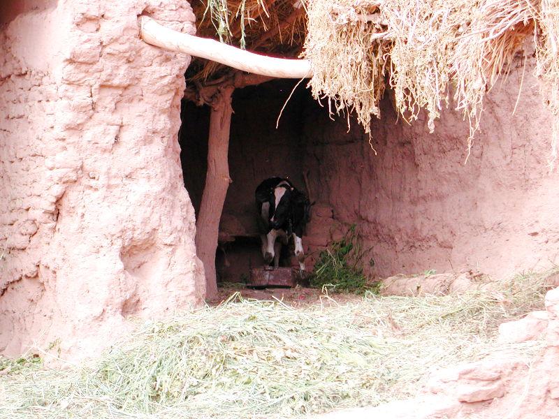 シルクロード一人旅「我的長征2006」その27・トルファン・吐峪溝-2725